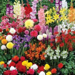 Пролетни луковици