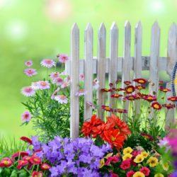 Семена за цветя