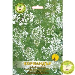 семена кориандър