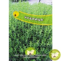 семена градинска чубрица
