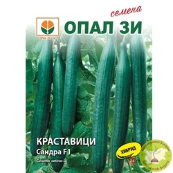 семена краставици сандра f1