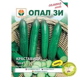 семена краставици теса f1