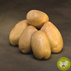 картофи сорая/посадъчен материал